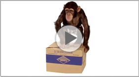 Watch the Video! The Miracle Box - So Simple!